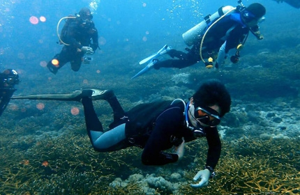 Dungun Dive Resort Deluxe Scuba Package
