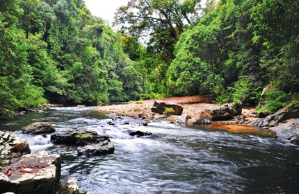 4 Days 3 Nights Taman Negara