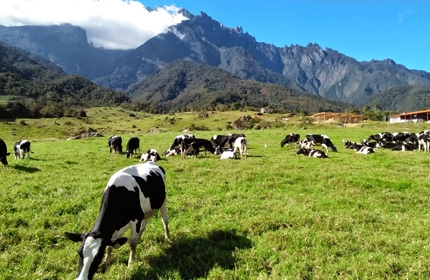 3 Days 2 Nights Special Kundasang and Kota Kinabalu Tour